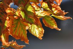 Arriva l'autunno
