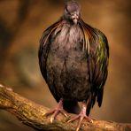 Art of Birds
