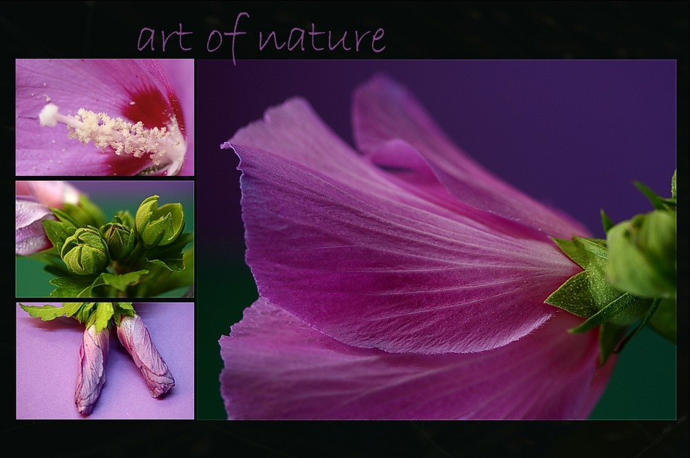 art of nature (2)