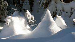 Art of Snow....