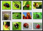 Artenvielfalt