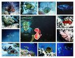 Artenvielfalt des Roten Meeres - Teil 1