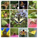 Artenvielfalt unserer Wiesen