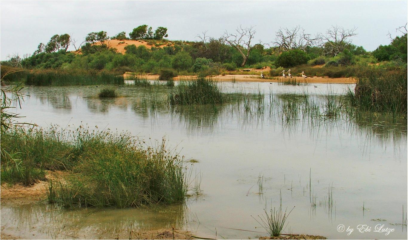 * Artesian Wetlands / Mungerinnie Station / Birdsville Track SA *