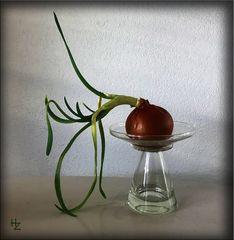 arty onion :)