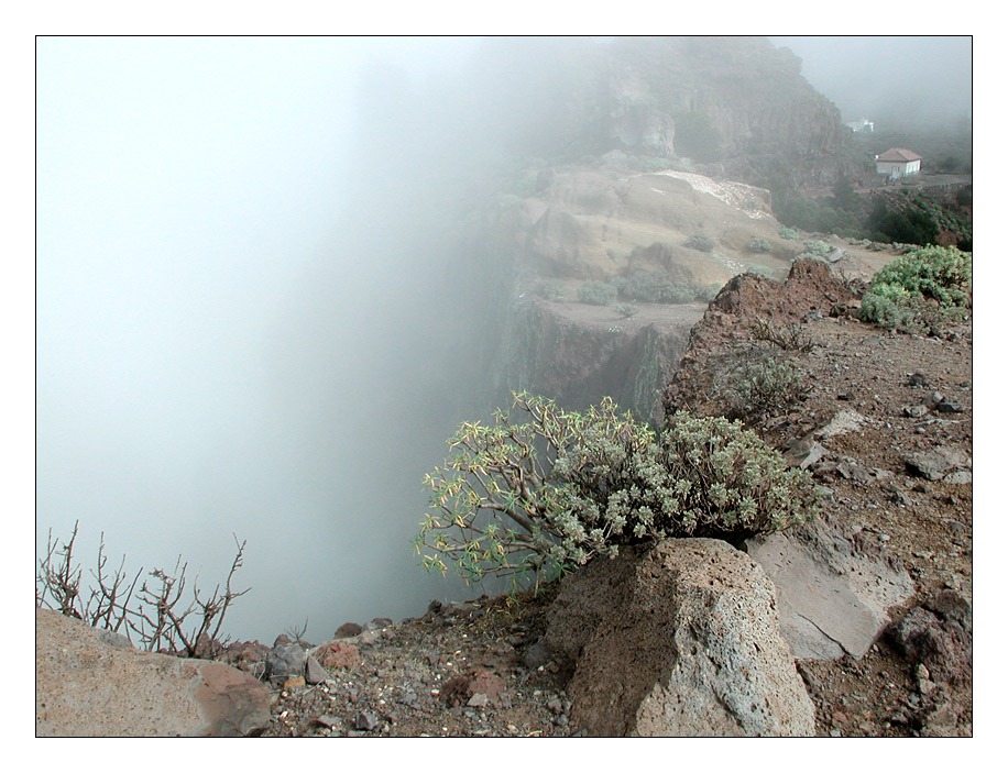 Arure im Nebel