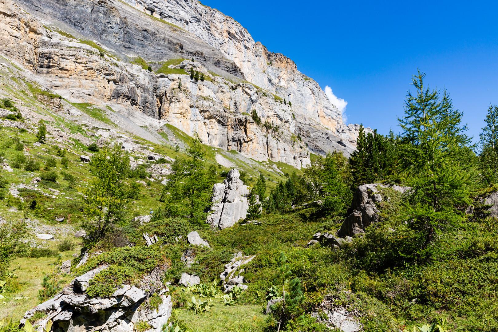Arvenwald am Gemmipass