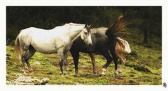 As a picture . Horses