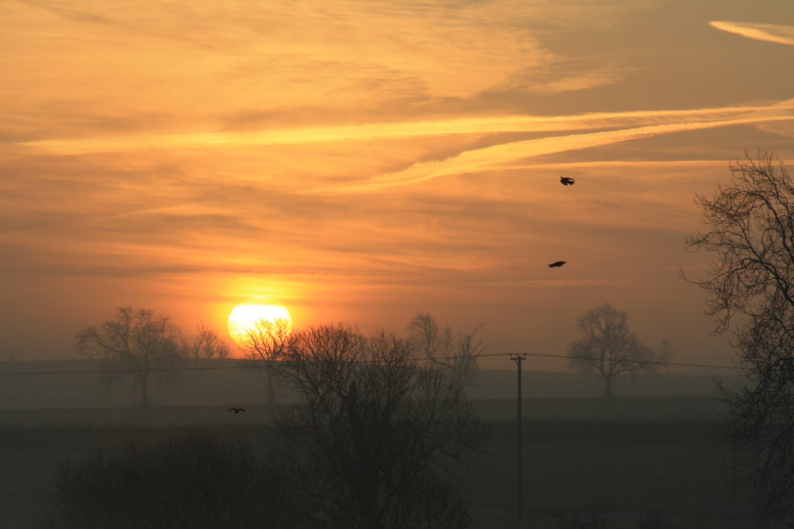 As the sun rises above the hill, the birds take flight