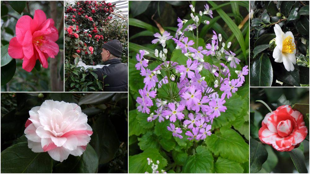 Asiatischer Frühling