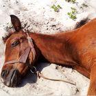 Asleep In The Sand