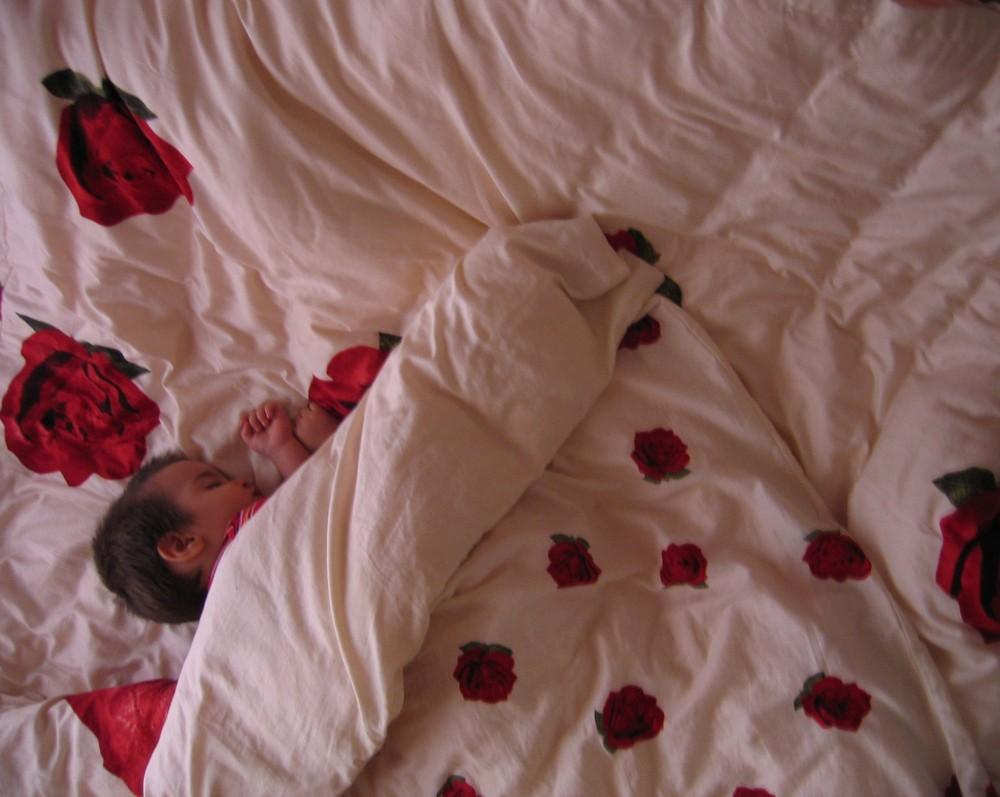 asleep rose