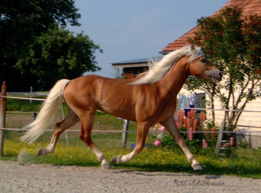 Asmaro - Nur fliegen ist schöner ;)