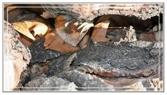 Asomando la cabecita entre la hojarasca de un tronco