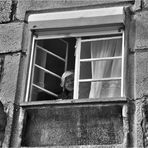 Asómate a la ventana