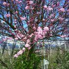 Aspettando la primavera