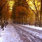 Assaggio d'Inverno