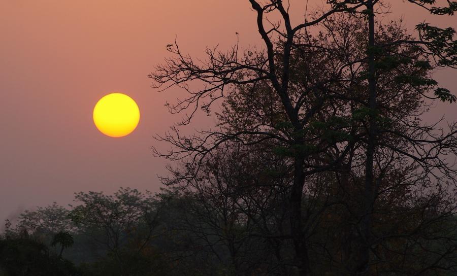 Assam Dawn
