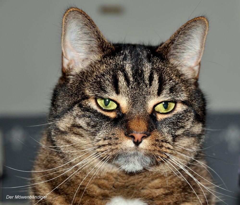 Assimoff ,Er ist ein fetter, fauler, oft sarkastischer Kater ,der gerne frisst und schläft