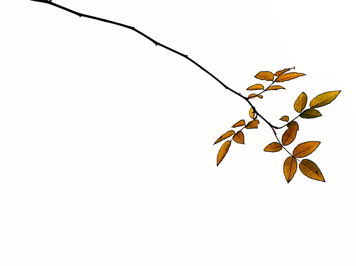 Ast im Herbst