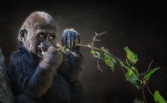 Ast mit jungem Gorilla