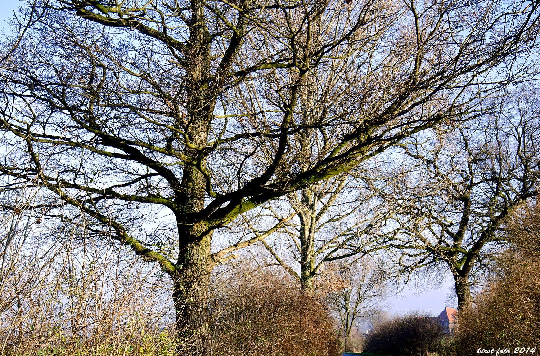 Astwerk der Bäume,