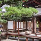 At Ninnaji Temple in Kyoto 5