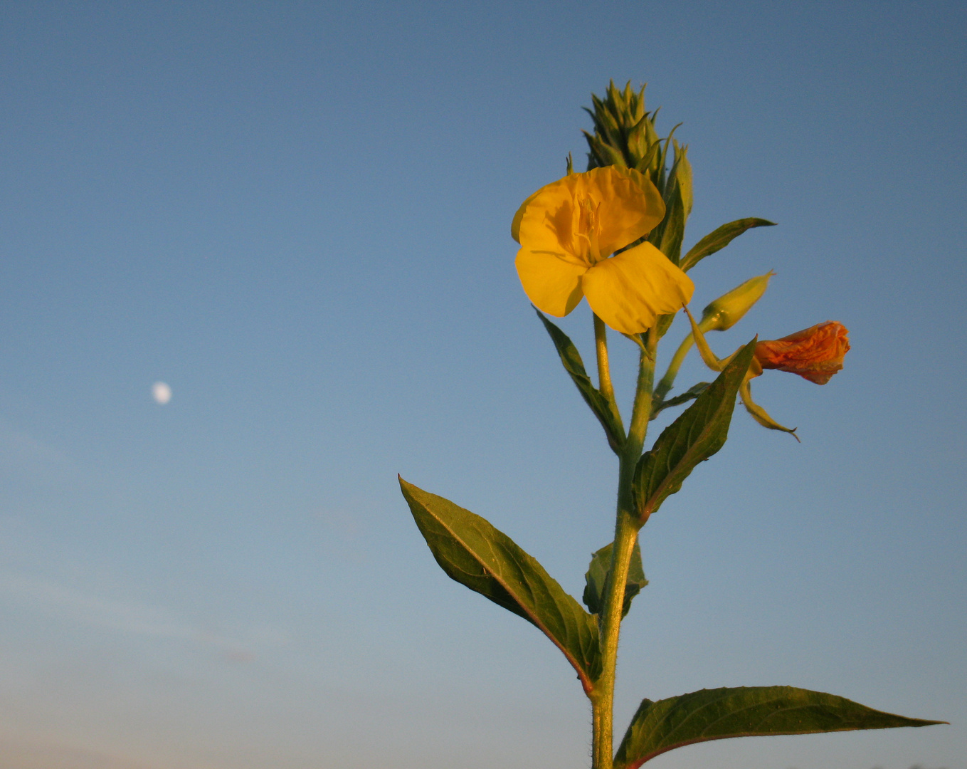 at sunset light with moon