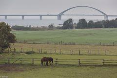 at the Fehmarnsund Bridge