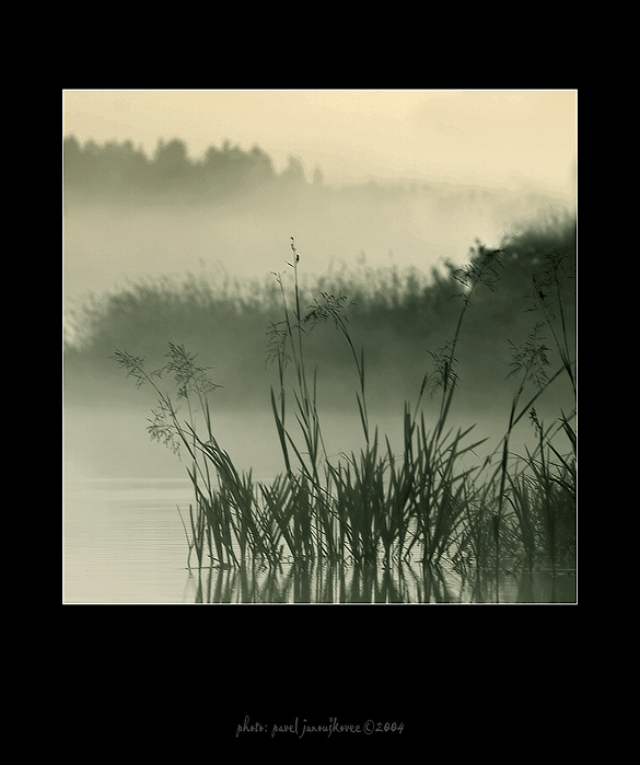 ... at the lake in the rushes ...