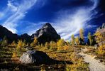 At the Tree-Line, Larch Valley