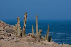 Atacama : Pazifik 3