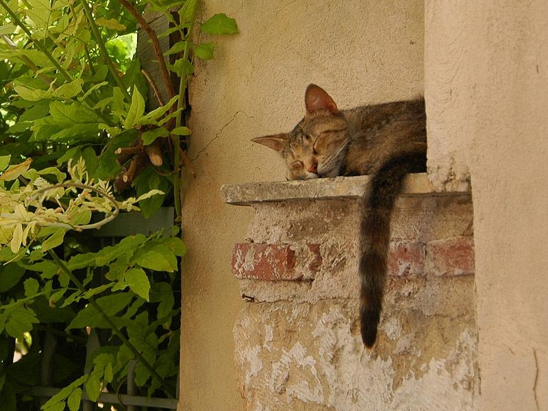 Athens Cat