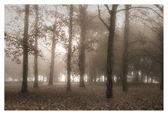 Atmosfere d'autunno #1