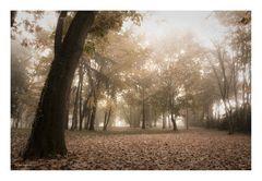 Atmosfere d'autunno #2
