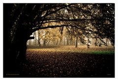 Atmosfere d'autunno #3