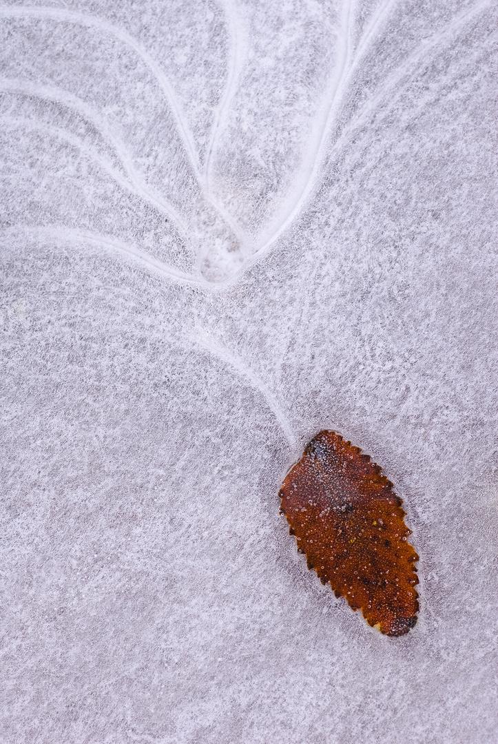 Atrapada en el hielo