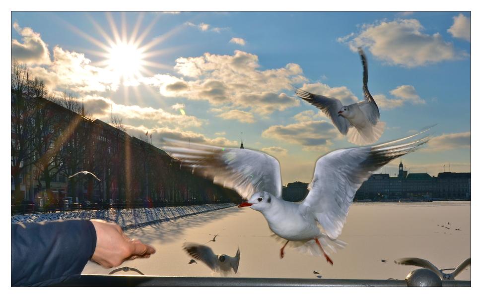 Attack Of The Hanseatic Seagull