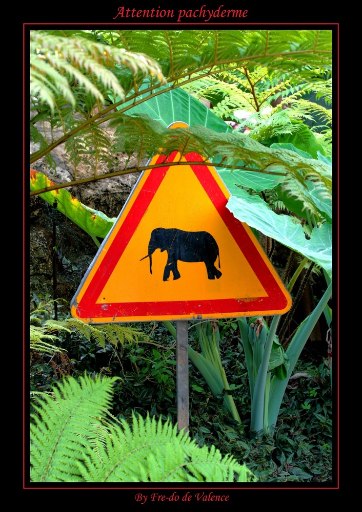 Attention pachyderme
