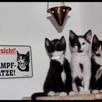 Attention! three black (fighting) cat(s)