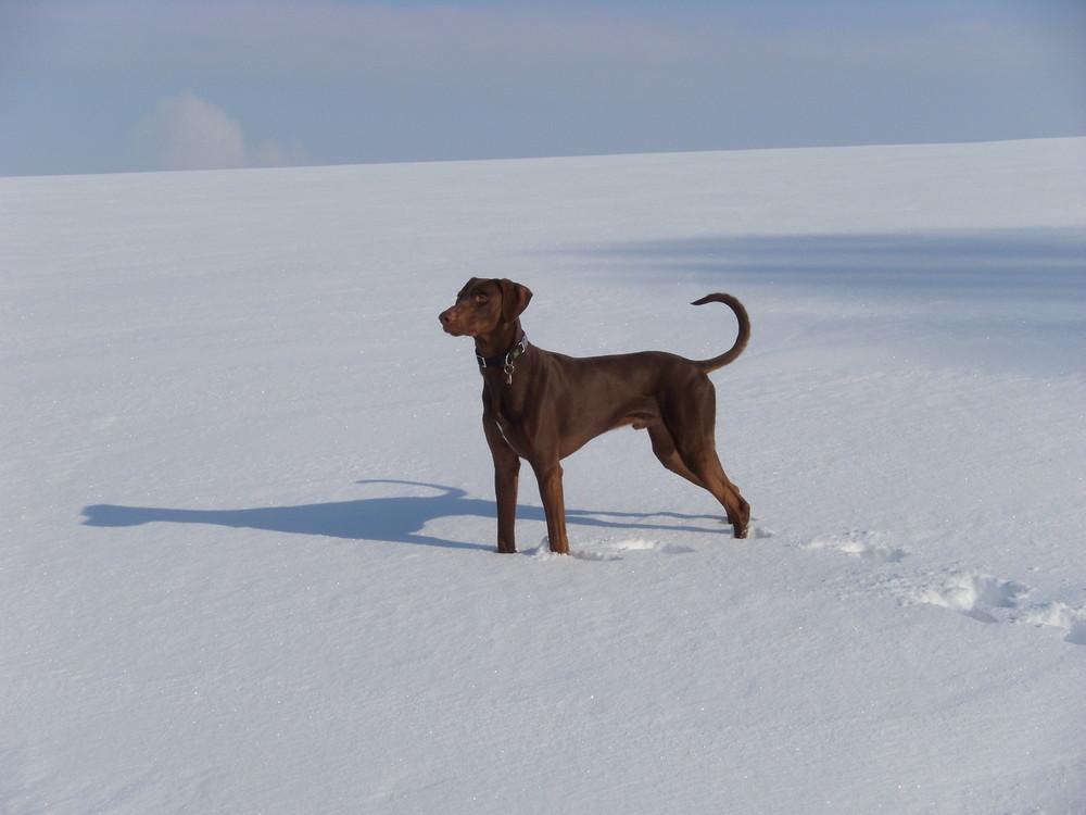 Attila im Schnee