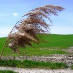 Attimo di vento..