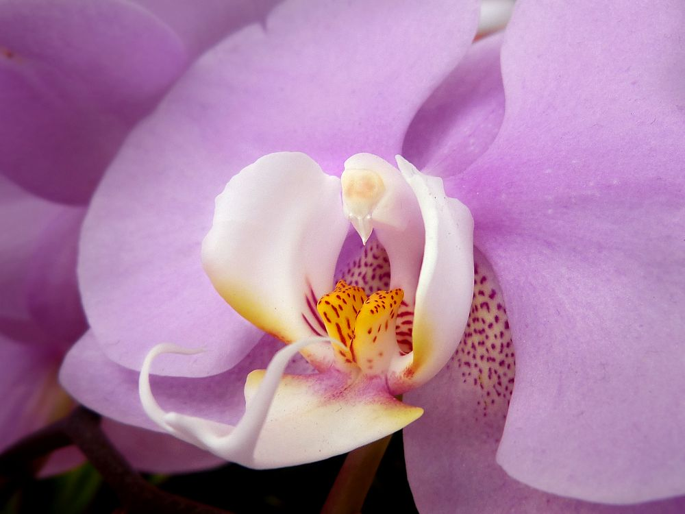 Attractive part of orchids
