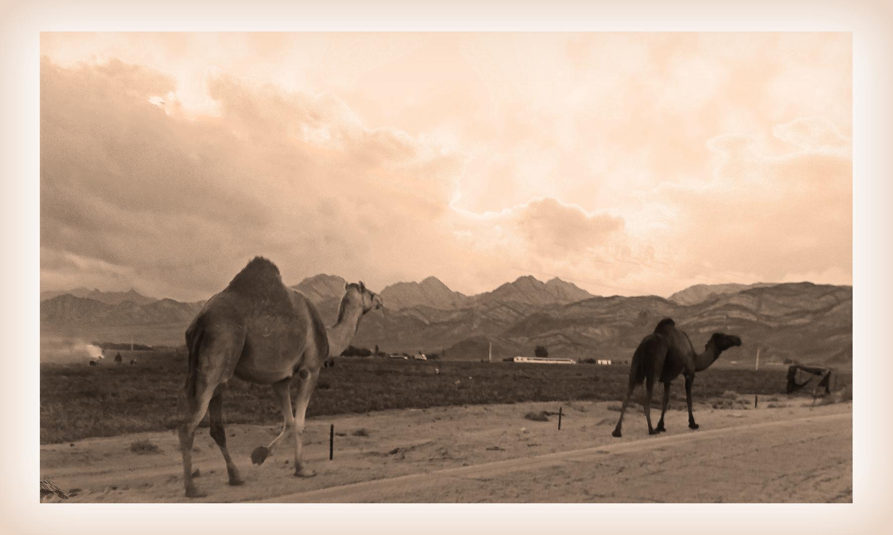 Au bord de la route en Jordanie