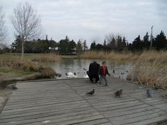au bord de l'étang .....