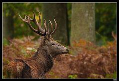 ...Au coeur de la forêt...