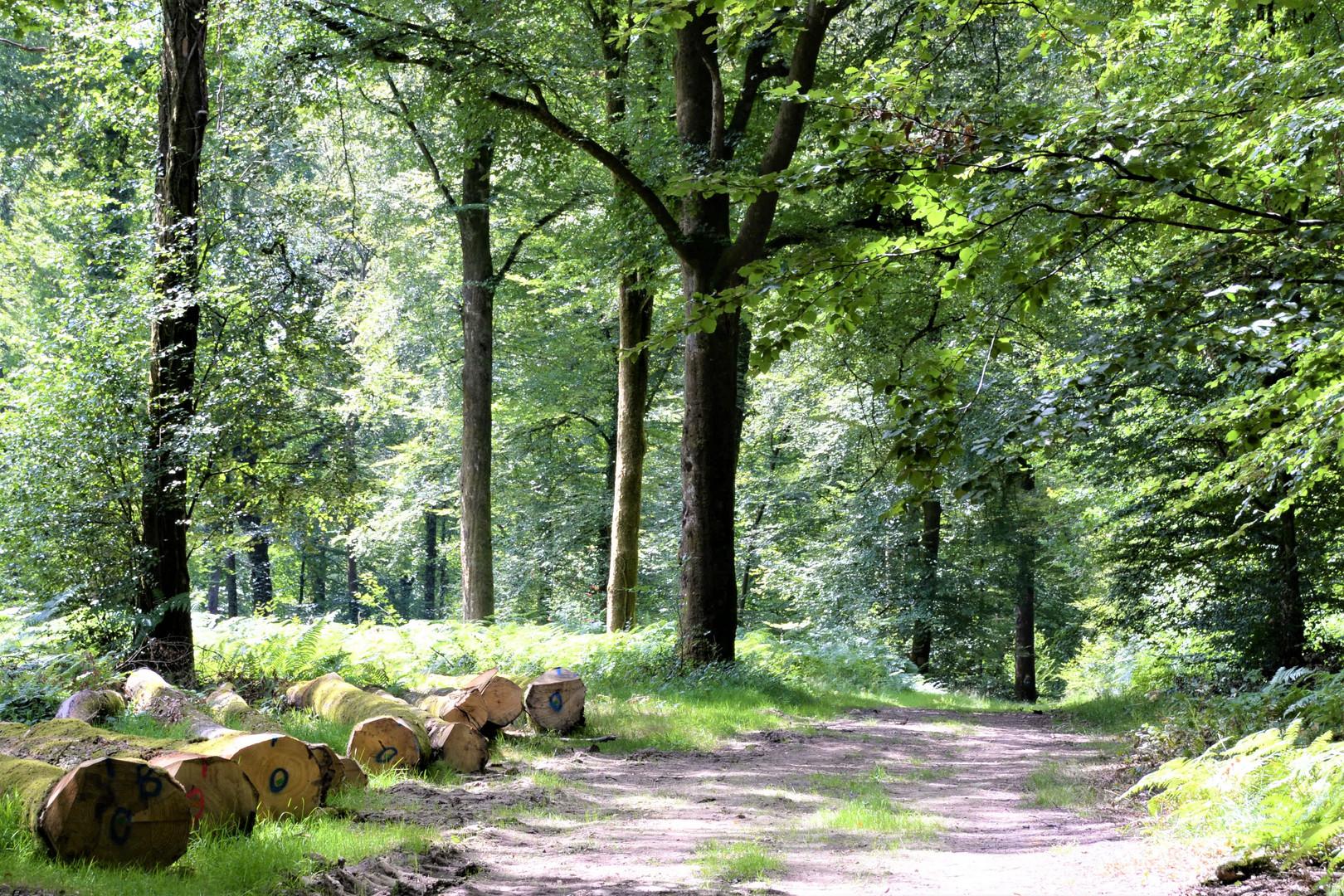 Au frais sous les grands arbres