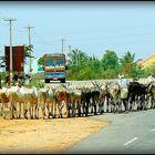 Au long des routes de l'Inde du Sud .- 10 -