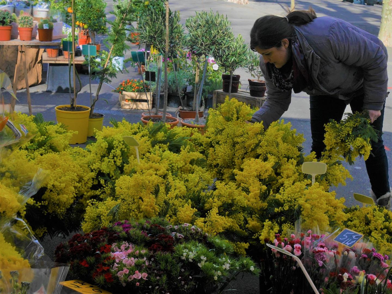 Au marché de Béziers, voici les mimosas