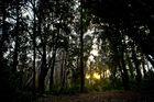 au milieu des arbres